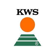 Насіння озимої пшениці КУБУС KWS Німеччина