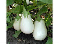 Семена баклажана Бибо F1 15 шт.