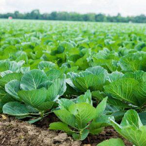 Питательные вещества для почвы