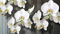 Фотообои 3D цветы 368x254 см Пучок орхидей (1015P8)