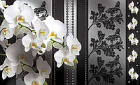 Фотообои 3D 368x254 см Фаленопсис белый (1299CN)