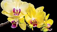 Фотообои 3D Орхидеи 368x254 см Желтые цветы на черном фоне (1343CN)