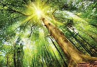 Фотообои 3D Природа, лес 254x184 см Свет на вершине (10112CN)