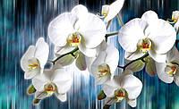 Фотообои 3D цветы (флизелин, бумага, 254х184, 368х254) Орхидеи под дождем (1668.21164)