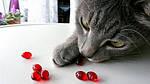 Пищевые добавки для кошек