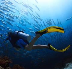 Ласти для підводного плавання
