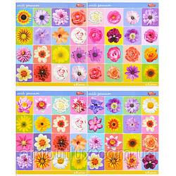 """Тетрадь цветная 48 листов, клетка """"Цветы"""""""