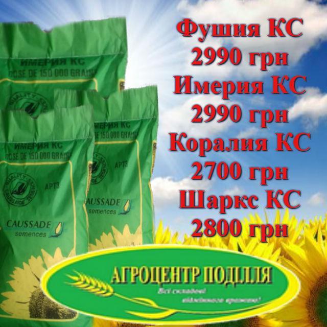 Распродажа остатков семян подсолнечника Коссад Семанс по выгодным ценам!!!