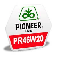 Насіння озимого ріпаку PR46W20 Pioneer | ПР46В20 Піонер®