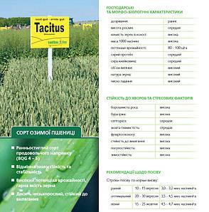 Насіння пшениці озимої Тацитус (Австрія) 1-ша репродукція, фото 2