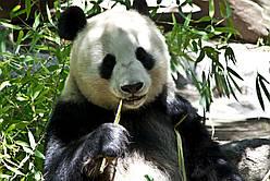 Детская посуда из бамбукового волокна