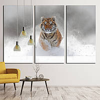 1831 Tiger in wild winter nature. Amur tiger running in the snow. Action wildlife scene with danger animal. Co