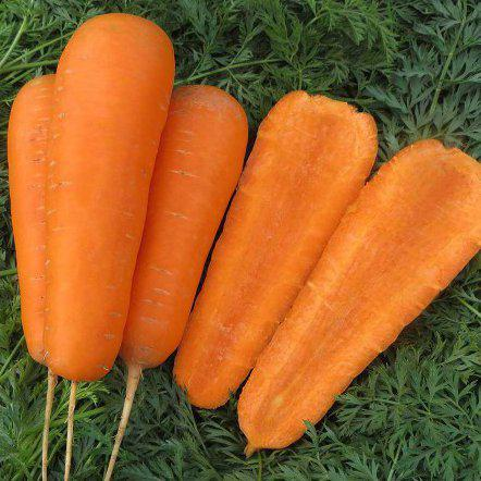 Семена моркови Боливар F1, (100 000 сем.)