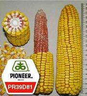 Насіння кукурудзи PR39D81 ФАО 260