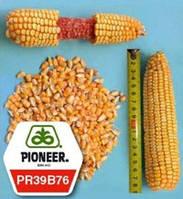 Насіння кукурудзи PR39B76 ФАО 280