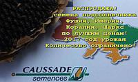 Акция на семена подсолнечника Caussade-Semences (Коссад Семанс)