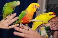 Продажа попугаев оптом-разные виды попугаев оптом.