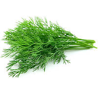 Семена Укропа Лесногородский