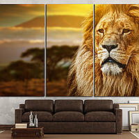 1115 Lion portrait on savanna landscape background and Mount Kilimanjaro at sunset