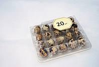 Упаковка для перепелиных яиц на 20 ячеек.