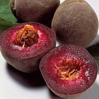 Персик Эритрокарпа (красномясый)