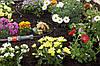 Шланг дождеватель 4,6 мм 15 м Gardena , фото 2