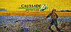 Насіння озимого ріпака Тріпті КС. 305-310 днів. Високоврожайний ріпак Тріпті зимостійкий та до посухи Коссад Семанс Франція.