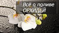 Всё о поливе орхидей: когда, как и чем поливать.