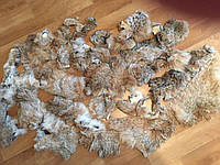 Шкуры меха рыси ( спинки)