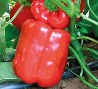 Геркулес F1 - семена сладкого перца, Clause - 50 грамм | профессиональные