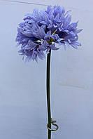 Лучок цветение