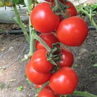 Семена томата Хитомакс F1 (100 сем.)