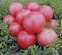 Насіння томату Пінк Світнес F1 (500 нас.) Lark Seeds