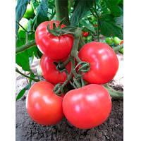 Семена томата Китару (KS-14) F1 (100 сем.) Kitano