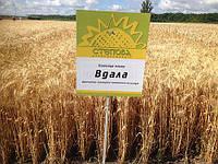 """Пшеница озимая """"Вдала"""" элита Украина"""