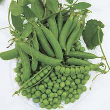 Насіння гороху солодкого Кінгсайз (2500 нас.) Lark Seeds