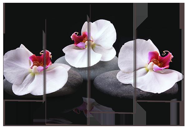 Модульна картина Білі орхідеї на чорному тлі