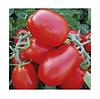 Семена томата 1510 F1 (500 сем.)