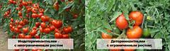 Парники и плёнка под томат. Выращивание томата