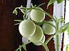 инкрустированные семена в блистерной упаковке
