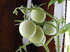 інкрустоване насіння в блістерній упаковці