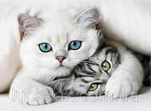 """Алмазная вышивка два котика """"Помолчи"""" полная выкладка, квадратные стразы 40, 30, НА ПОДРАМНИКЕ"""