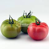 Семена томата Чимган F1, 250 семян, фото 4