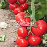 Семена томата Чимган F1, 250 семян, фото 2