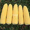 Семена сладкой ( сахарной ) кукурузы Турбин F1, 5000 семян
