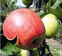 Яблоня летняя сорт Дельбарестиваль