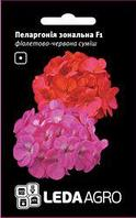 Семена пеларгонии Зональная F1, 5 сем., фиолетово-красная смесь
