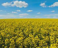 Семена рапса Квебек, Seed Grain Company