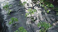 Агроткань чёрная 100 г/м2 AGROJUTEX 100м (шир 1,05м), фото 1
