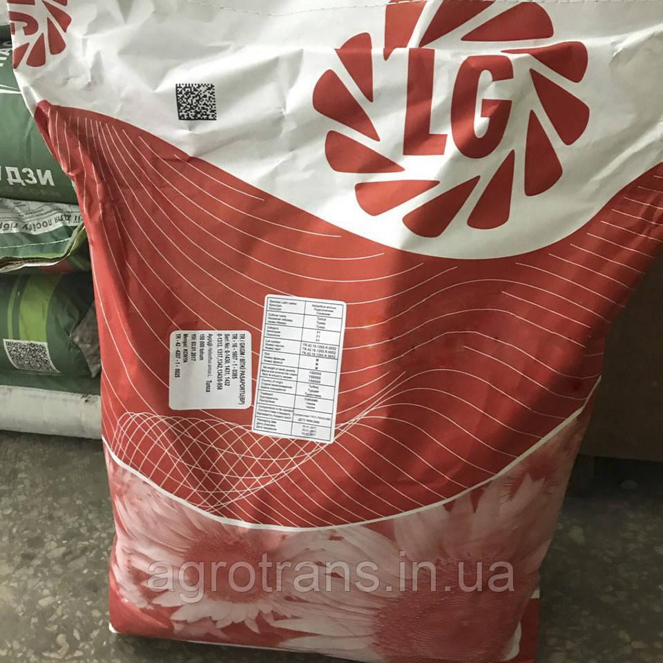 Семена подсолнечника, Limagrain, LG 5633 CL, под евролайтинг